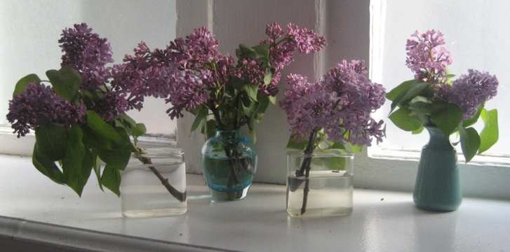 Small cuttings in small vases