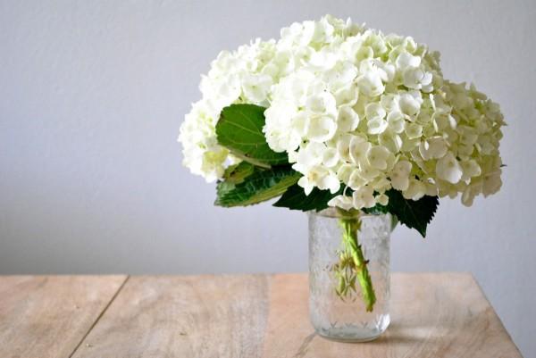 white-hydrangea-e1339353120798