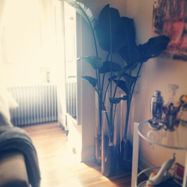 jentertaning_houseplants